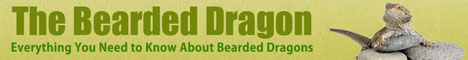 The Bearded Dragon