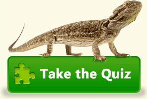 The Bearded Dragon » Everything About Bearded Dragons