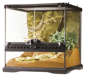 How To Setup The Perfect Leopard Gecko Habitat Step By